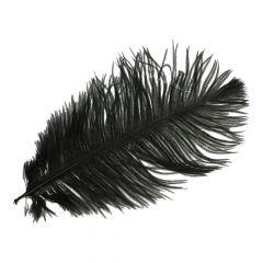 Dekorative Federn 22cm - 10Stk